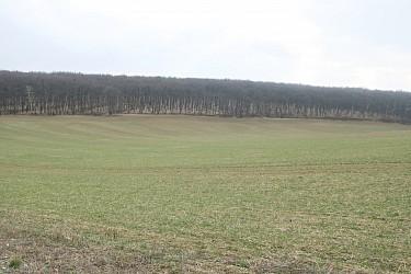 Prodej pozemků v k.ú. Žebětín